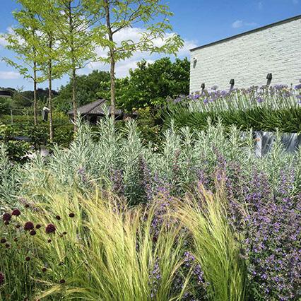 Landelijke Tuin Ontwerp En Realisatie Van Uw Landelijke Tuin