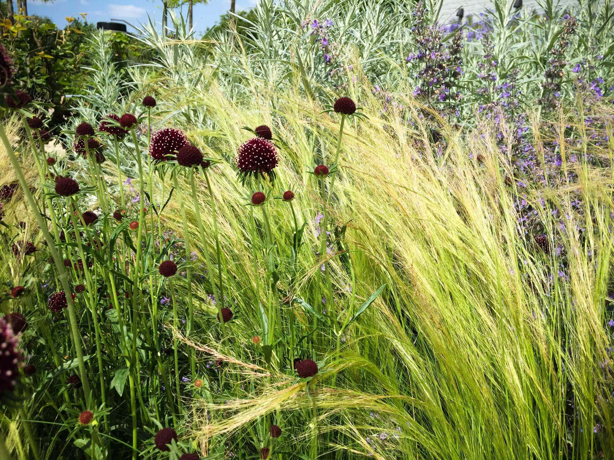 Tuinen ontwerp en aanleg van uw tuin groenseizoen tilburg
