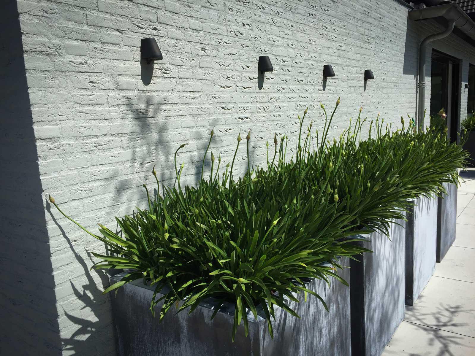 Beplanting strakke moderne tuin